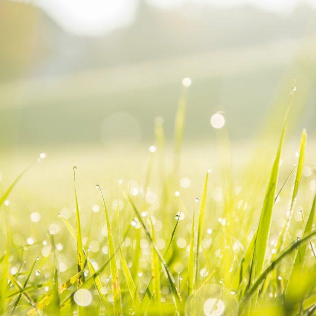 Close up grass 1280X853