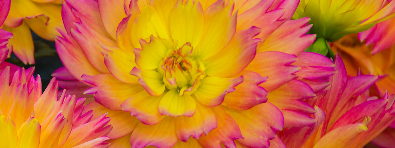 Flowers-Yellow-Pink-1280x480
