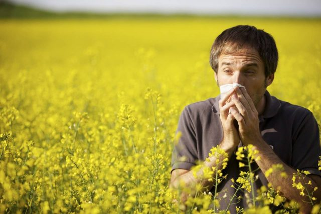 allergy rape seed field male sneeze seattle wa