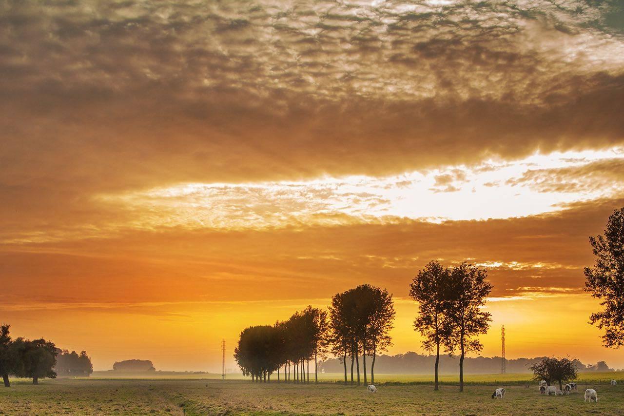 landscape_farmland-background_med