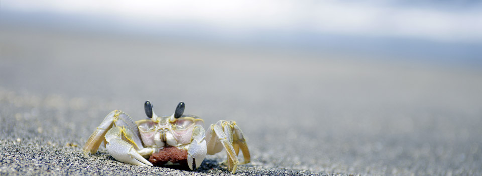 crab on a beach to advertise dry eyes