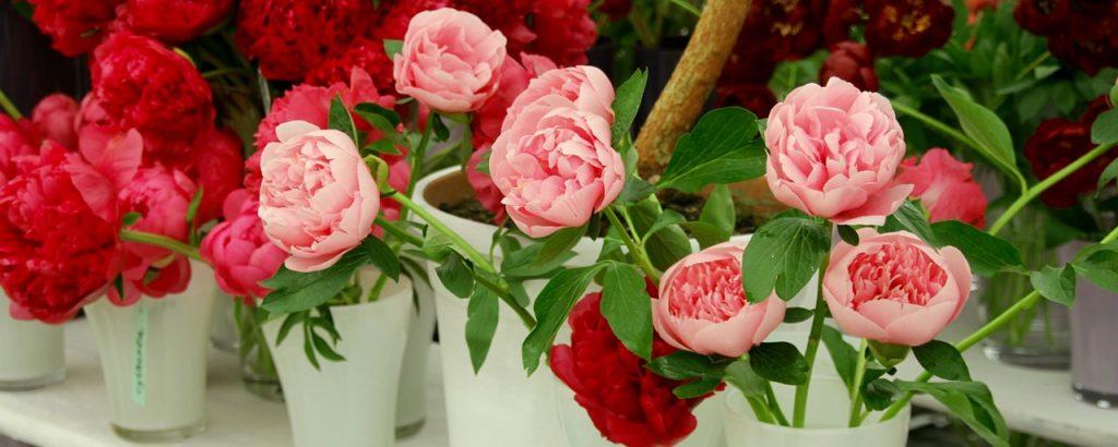 wild rose 1405442 1280