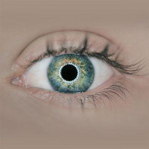 The human eye, Optometrist in Raleigh, NC