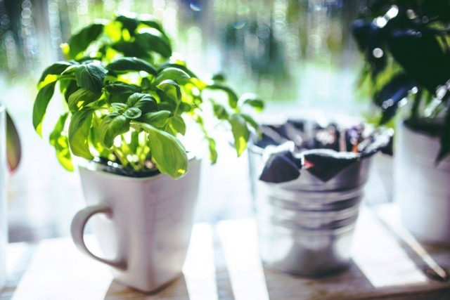 Potted Plants - Eye Care, Eye Exam - Kissimmee & Lakeland, FL