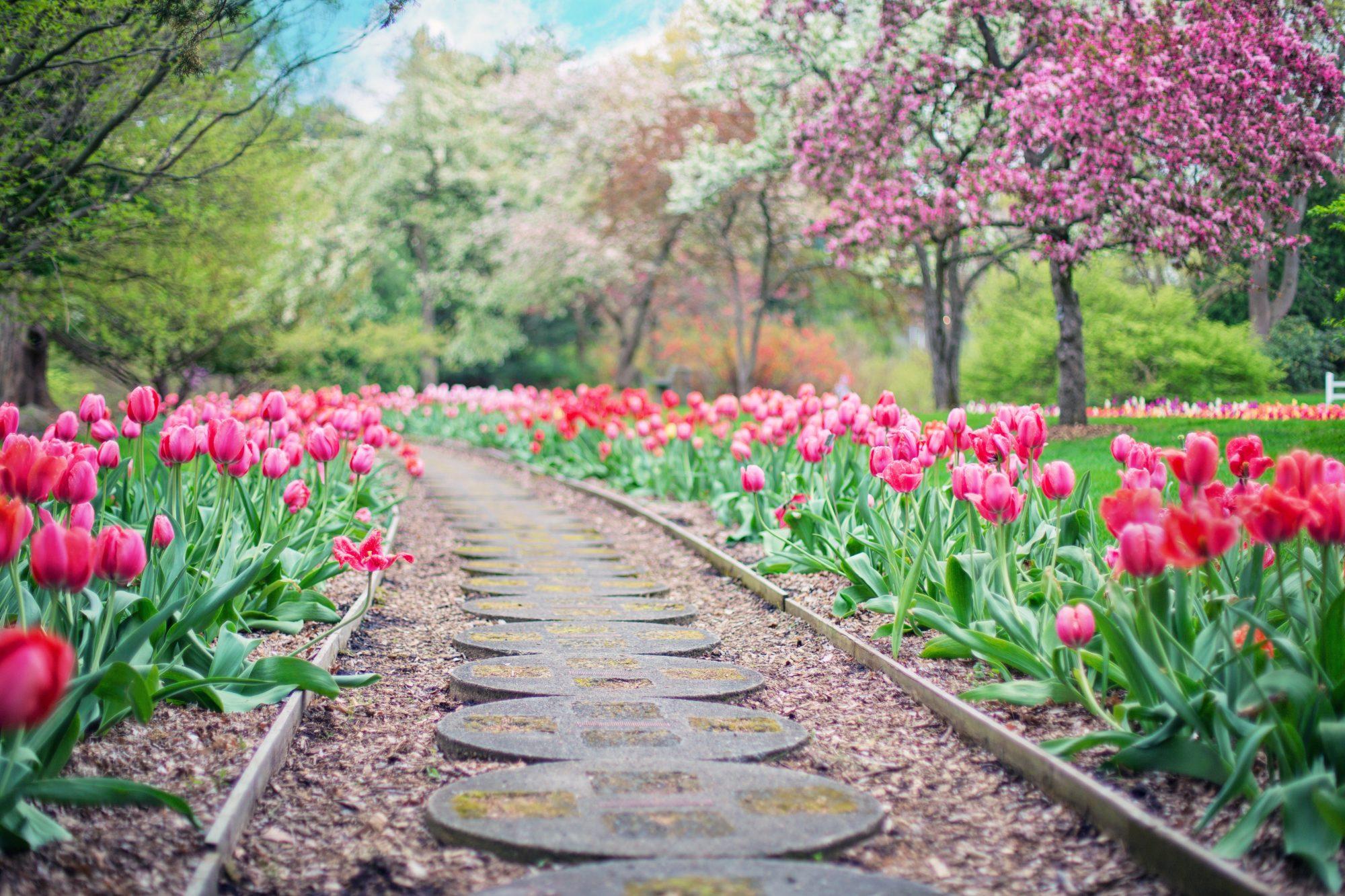 beautiful-bloom-blooming-414160-1-e1526323833756