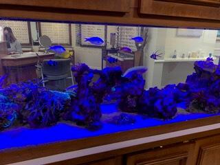 The aquarium in our Lantana, Florida eye care clinic