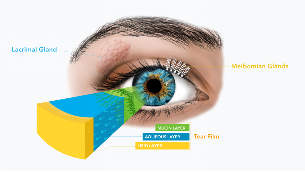 layer of the tear film