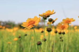 Flowers in field, TSO Wichita Falls