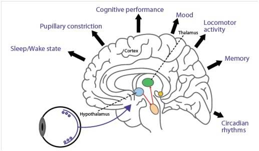 blue light brain
