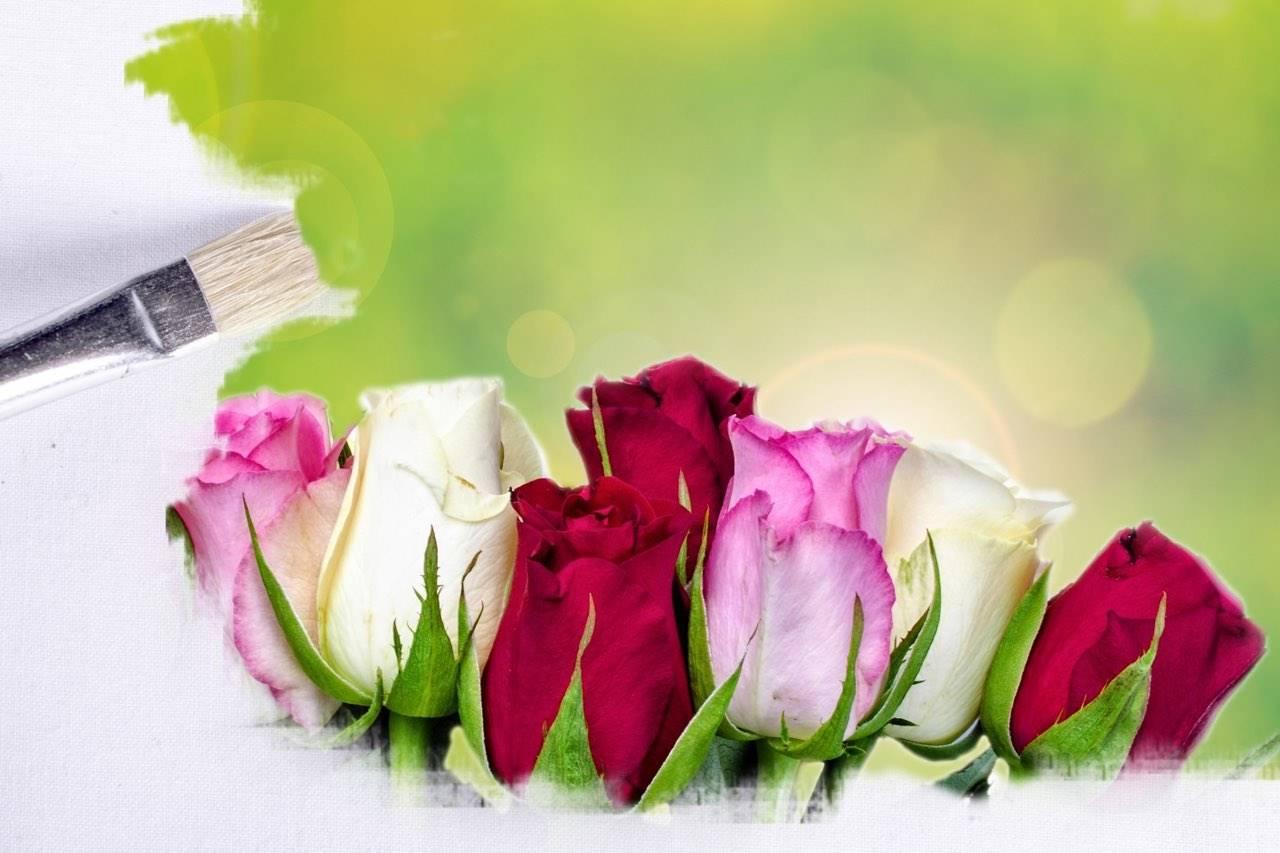 paintbrush-roses
