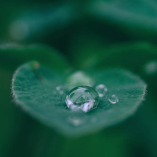 Rain drops on a leaf, Optometrist in Orlando & Lake Mary, FL