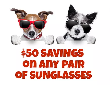 50 off dogs