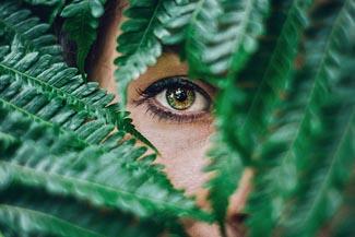 single gree eye in leaves.jpg
