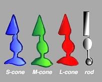 Color Photoreceptors