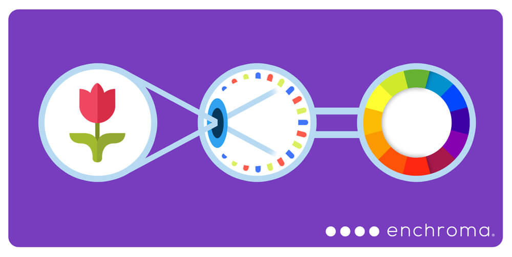 how eyes see color enchroma logo purple