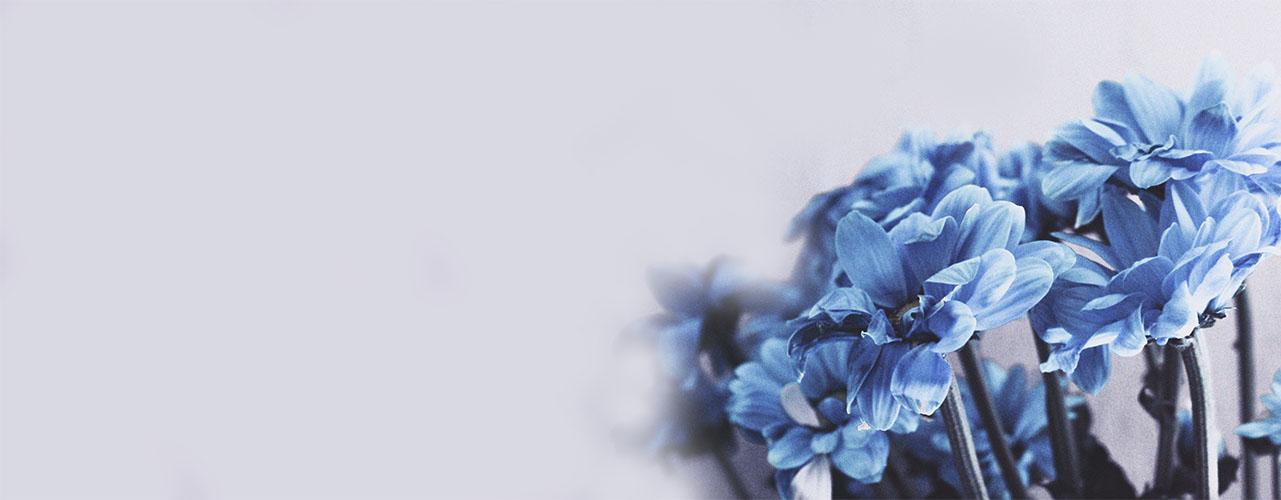 blue-flowers_1280x480