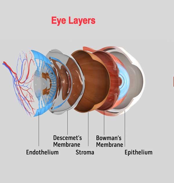 eye layers