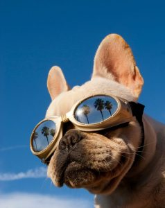 dog goggles preview