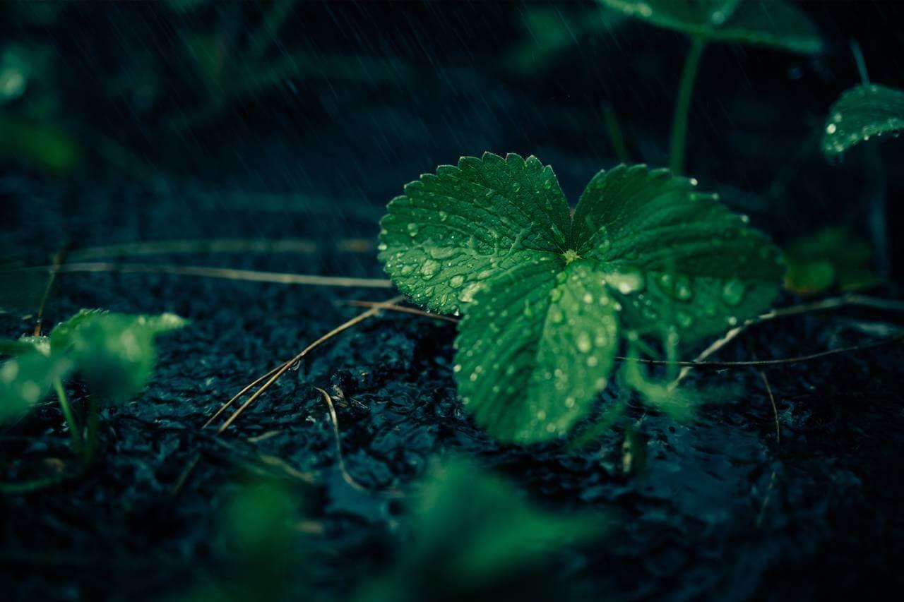 Spa-like-rainy-ivey1280x853