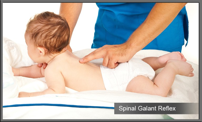 Spinal Galant