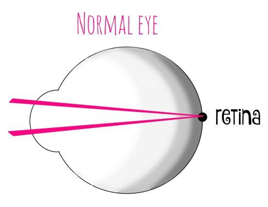 eye ball cornea normal