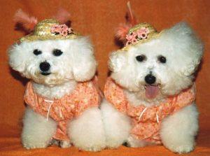 2 dogs dressed in hat imgsundayhats001