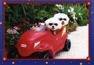 2 dogs in toy car imgcarpups001
