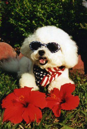 dog in sunglasses imgallamericanbabe001