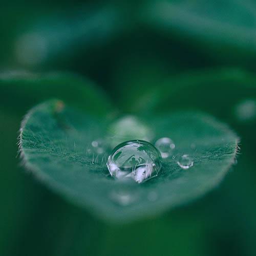 Rain drops on a leaf, Optometrist in Colorado Springs, CO