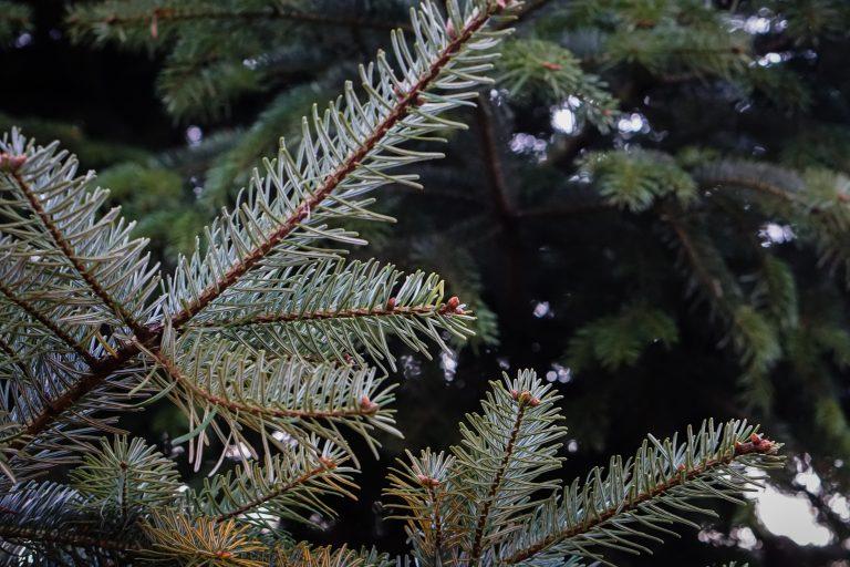 tree 768×512
