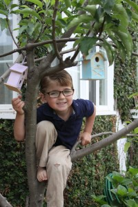 young boy climbing a tree