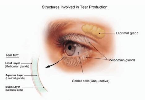 Tear Production