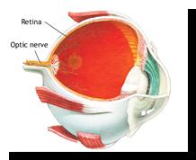 Retina3D