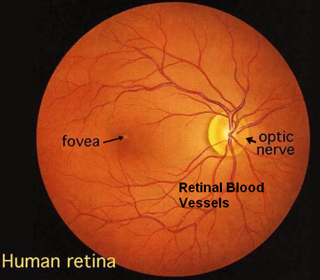 Retinal blood vessels appearance