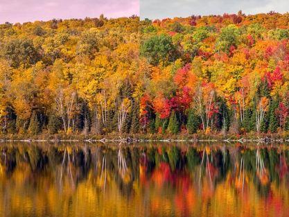 fall colors cvd vs normal 2