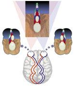 callihan visiontherapy twoviews