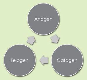 Telogen Cycle Graph