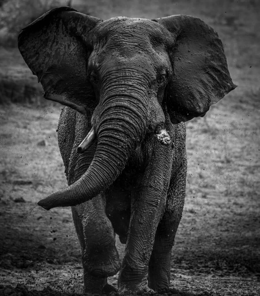 Mud Elephant