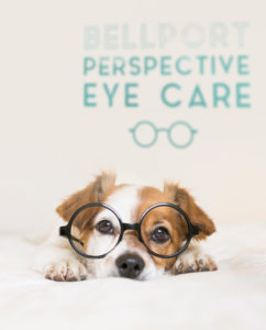 Close,Up,Portrait,Of,A,Young,Cute,Dog,Wearing,Glasses.