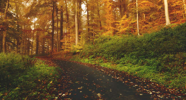 Color-blind-forest-road-eye-care-650x350