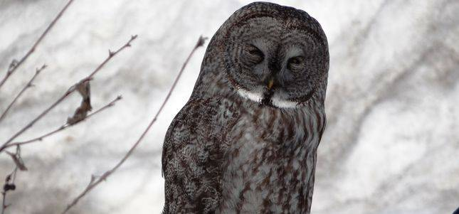 steinhauer.owl_.rs_