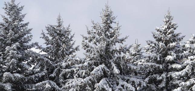 steinhauer.winter_pines.rs_