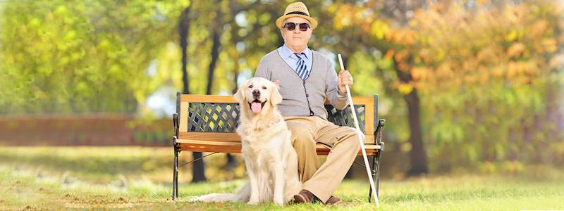man wearing sunglasses on bench with dog 800X300
