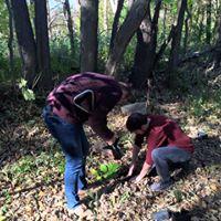 tree planting couple
