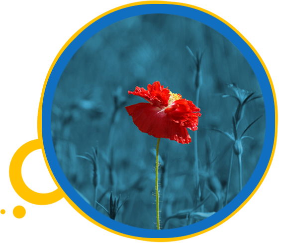 red flower - eye doctor - eye care - Ripley, Jackson, Humboldt & Dyersburg, TN
