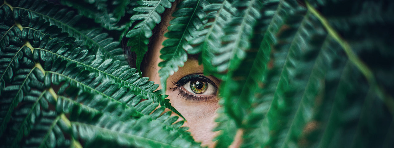 eye peeking from fern 1280x480