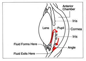 Eye diagram showing fluid exits